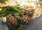 verona-reptiles-2013-043