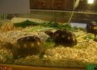 verona-reptiles-2013-044