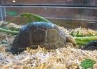 verona-reptiles-2013-046