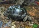 verona-reptiles-2013-047