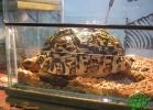 verona-reptiles-2013-049