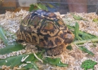 verona-reptiles-2013-050