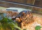 verona-reptiles-2013-051