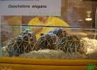 verona-reptiles-2013-052