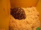 verona-reptiles-2013-053