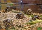 verona-reptiles-2013-056