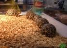 verona-reptiles-2013-057