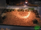 verona-reptiles-2013-059