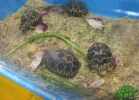 verona-reptiles-2013-060