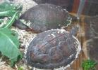 verona-reptiles-2013-061