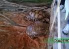 verona-reptiles-2014-005