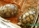 verona-reptiles-2014-006