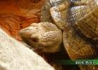 verona-reptiles-2014-007
