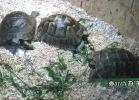 verona-reptiles-2014-008