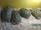 verona-reptiles-2014-009