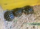 verona-reptiles-2014-010