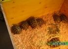 verona-reptiles-2014-013