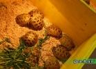 verona-reptiles-2014-014