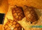 verona-reptiles-2014-023