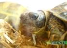 verona-reptiles-2014-026