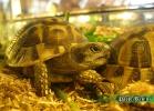 verona-reptiles-2014-027