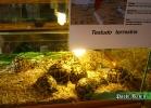 verona-reptiles-2014-028