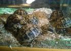 verona-reptiles-2014-029