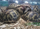 verona-reptiles-2014-030