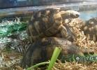 verona-reptiles-2014-031