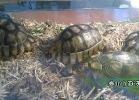 verona-reptiles-2014-032