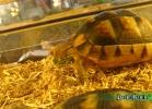 verona-reptiles-2014-033