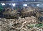 verona-reptiles-2014-036