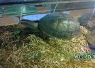 verona-reptiles-2014-040