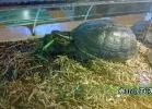 verona-reptiles-2014-041