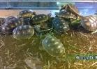 verona-reptiles-2014-042