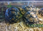 verona-reptiles-2014-043