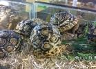 verona-reptiles-2014-044