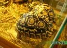 verona-reptiles-2014-045