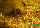 verona-reptiles-2014-047