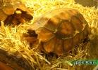 verona-reptiles-2014-048