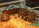 verona-reptiles-2014-050