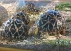 verona-reptiles-2014-051