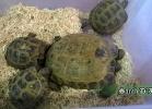 verona-reptiles-2014-053