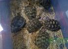 verona-reptiles-2014-054