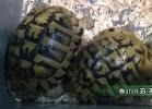 verona-reptiles-2014-055