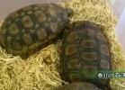 verona-reptiles-2014-056