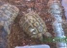 verona-reptiles-2014-057