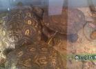 verona-reptiles-2014-059