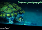005-graptemys-pseudogeographica-kohnii-david-james-best