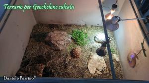 022.geochelone-sulcata-daniele-parrino